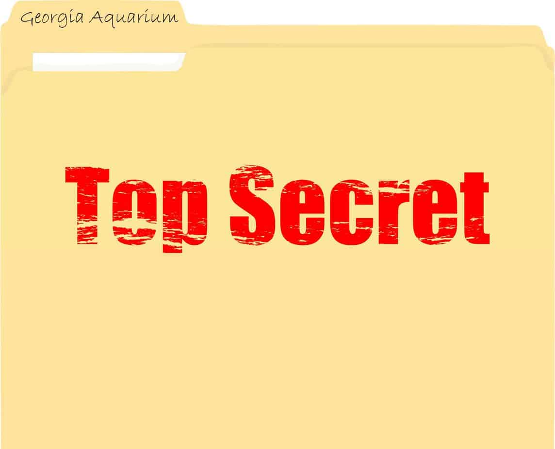 Top Secret Georgia Aquarium