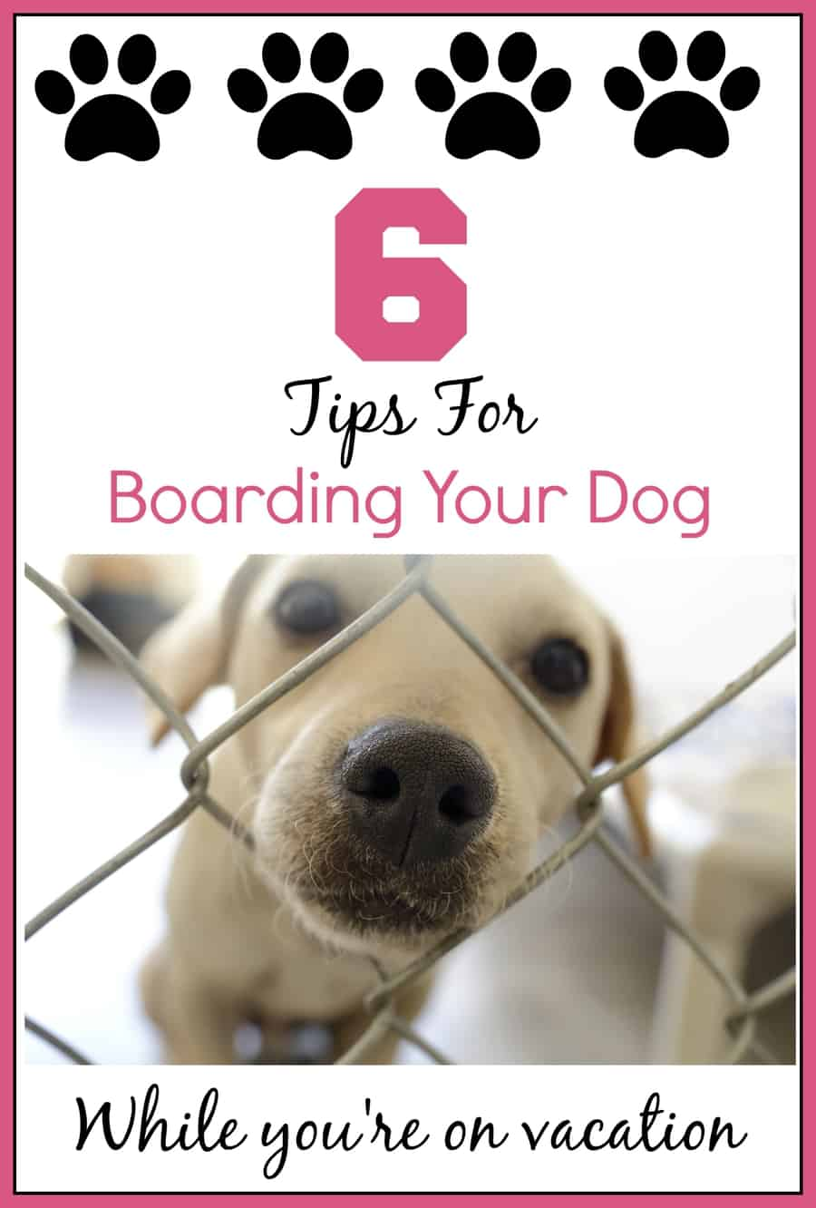 6 Tips For Boarding Your Dog While You're Away