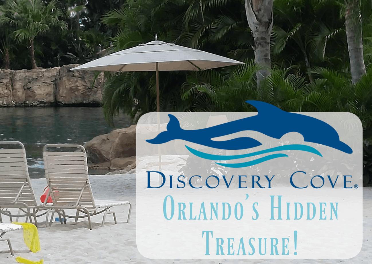 Visit Discovery Cove – Orlando's Hidden Treasure!