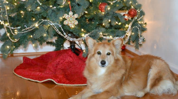 Tips and Tricks for Celebrating Christmas with Your Dog