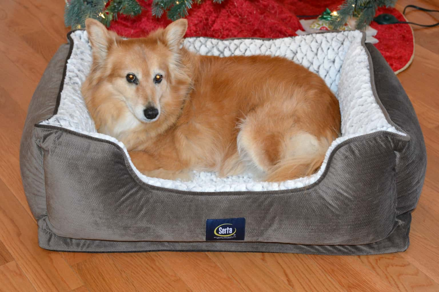 emmy-in-christmas-bed