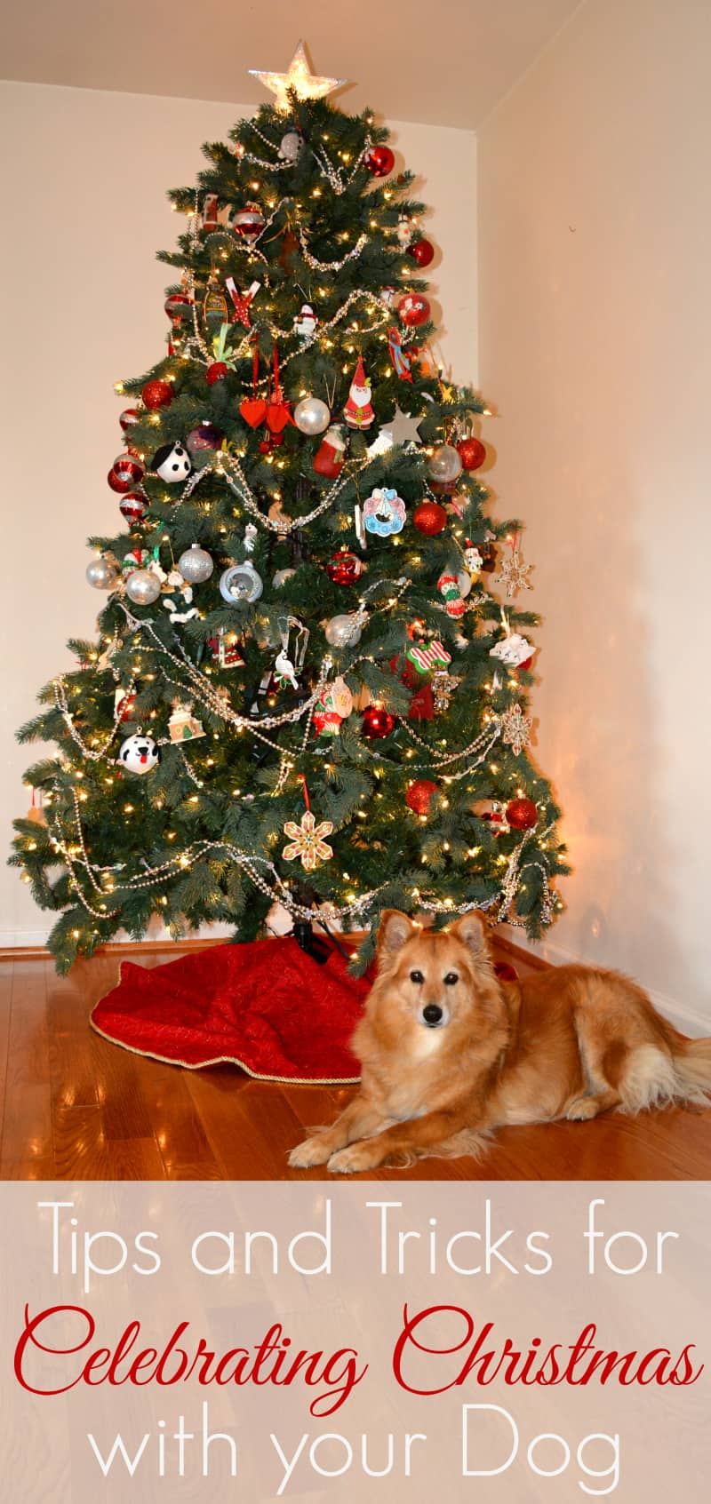 tips-for-dogs-at-christmas