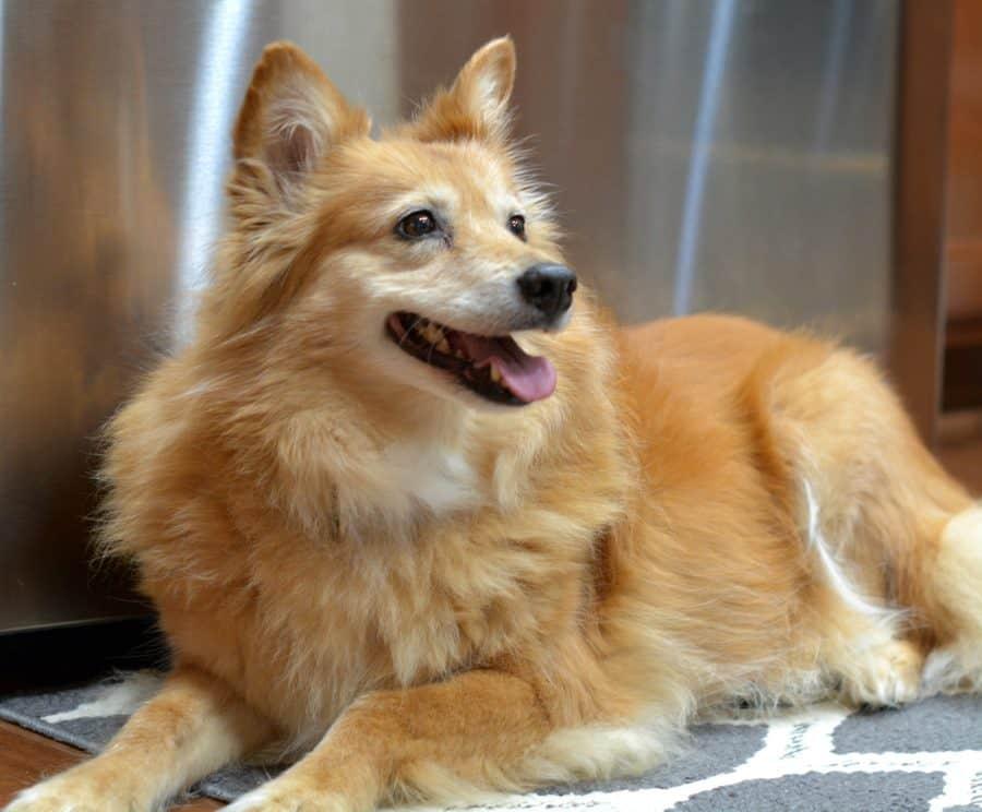 Our Dog Emmy
