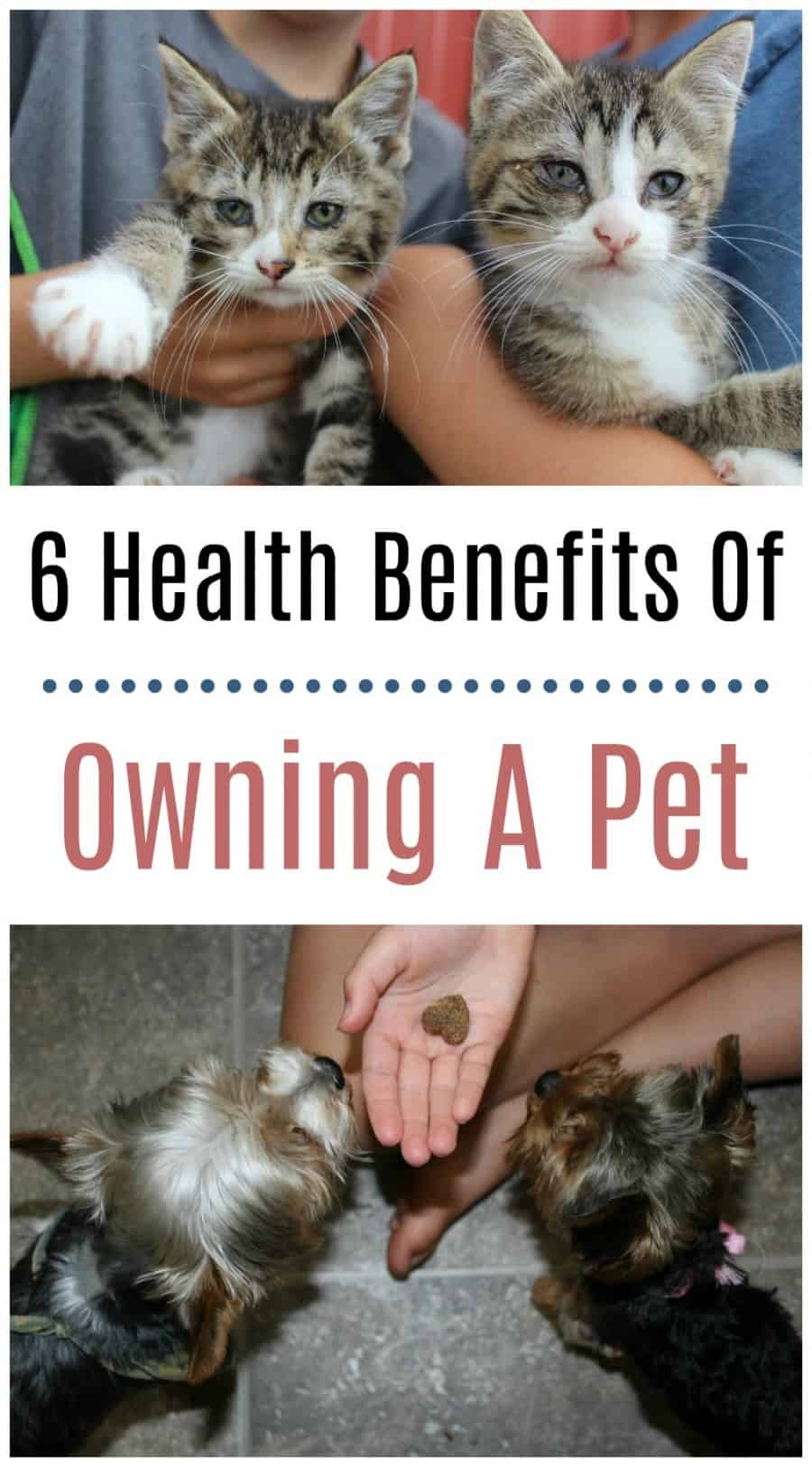6 Health Benefits To Owning A Pet