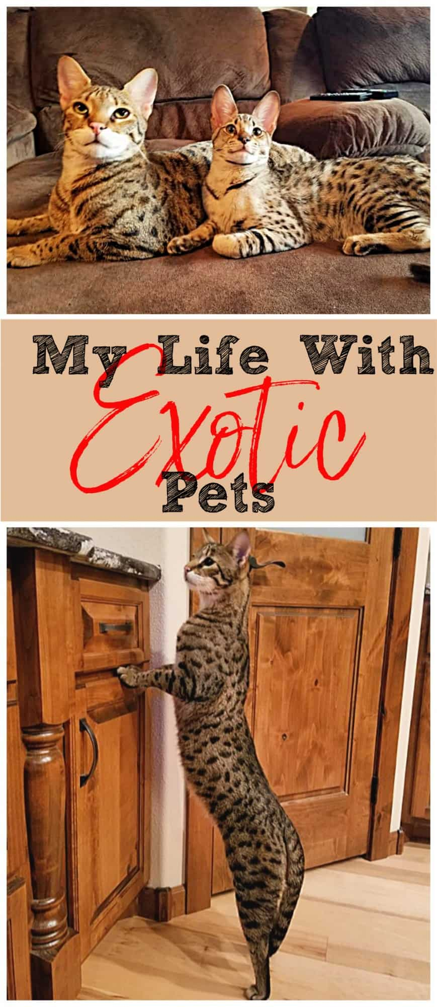 My Life With Exotic Pets {& Neato Botvac}
