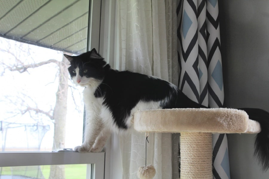 What You Need To Know Before Getting A House Cat - Cat on cat tree