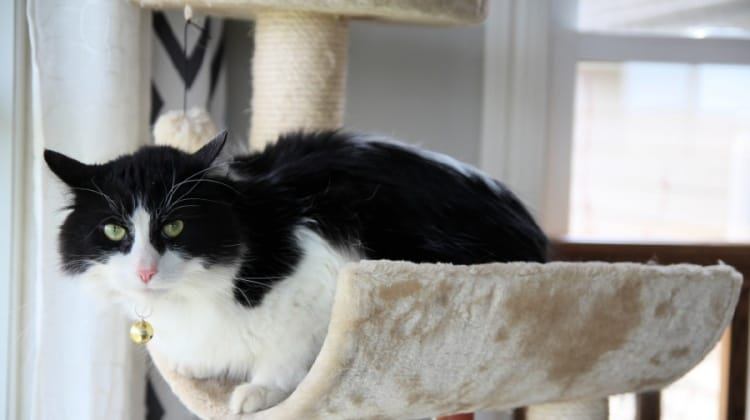What You Need To Know Before Getting A House Cat {+ Armarkat Cat Tree Giveaway!}