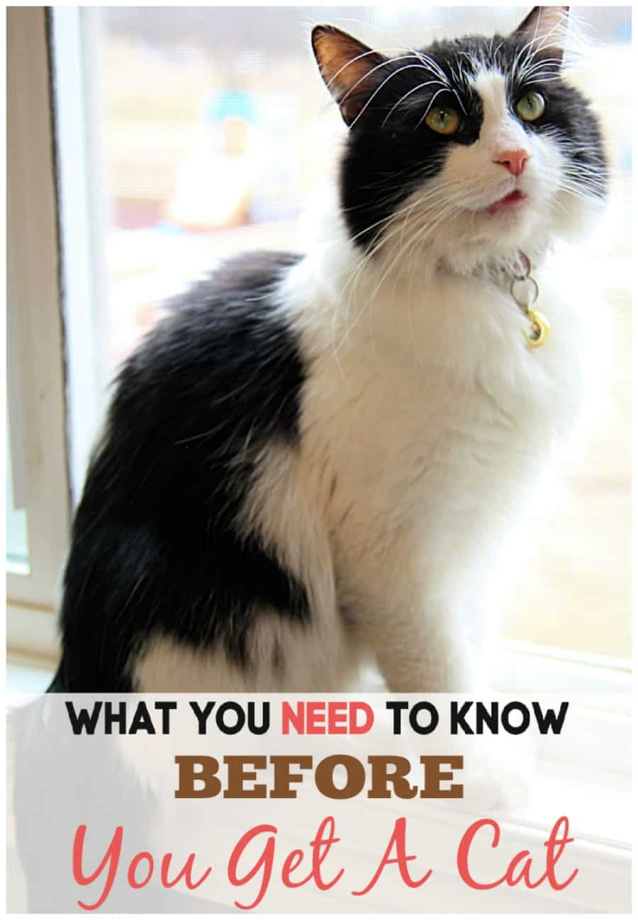 What You Need To Know Before Getting A House Cat