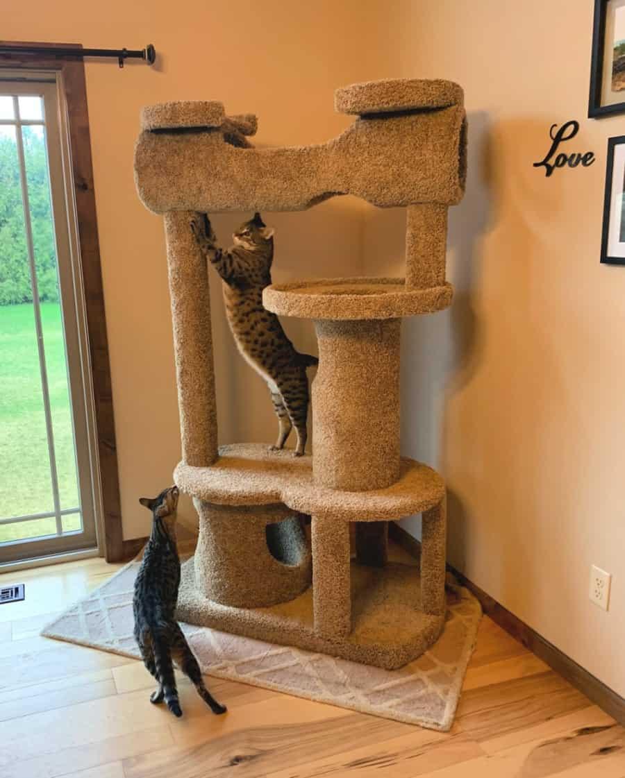 durable cat furniture