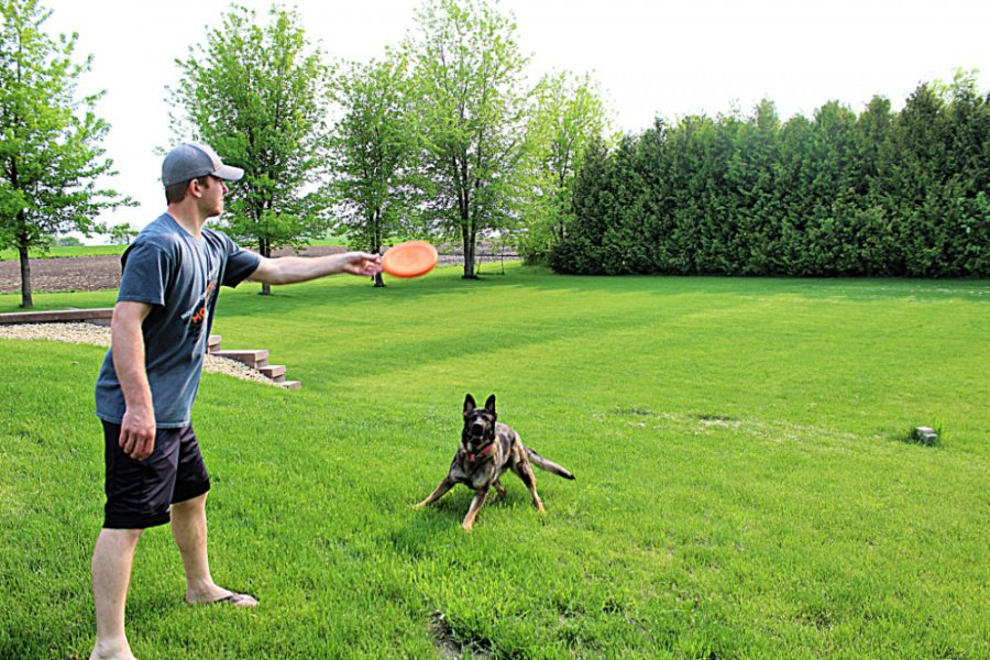 8 Must-Have Items to Keep Your Dog Busy Outside This Summer