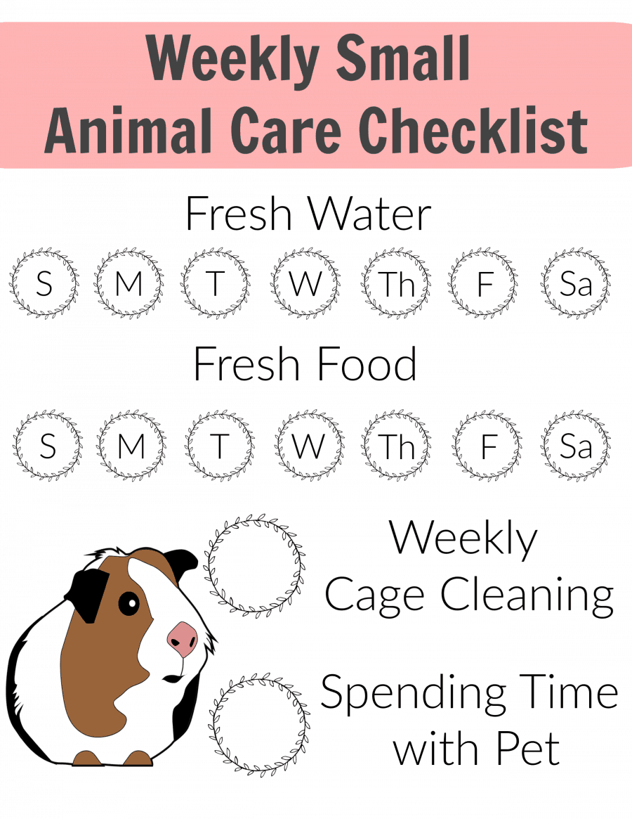 Weekly Small Animal Care Checklist