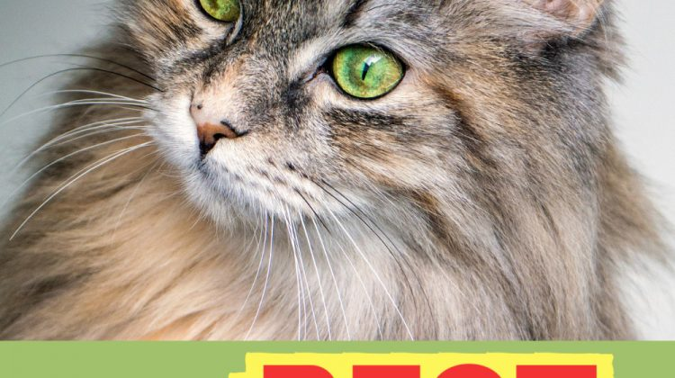 The BEST Gifts for Cats