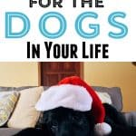 santa dog - Best Gifts For Dogs - Dog Holiday Gift Guide
