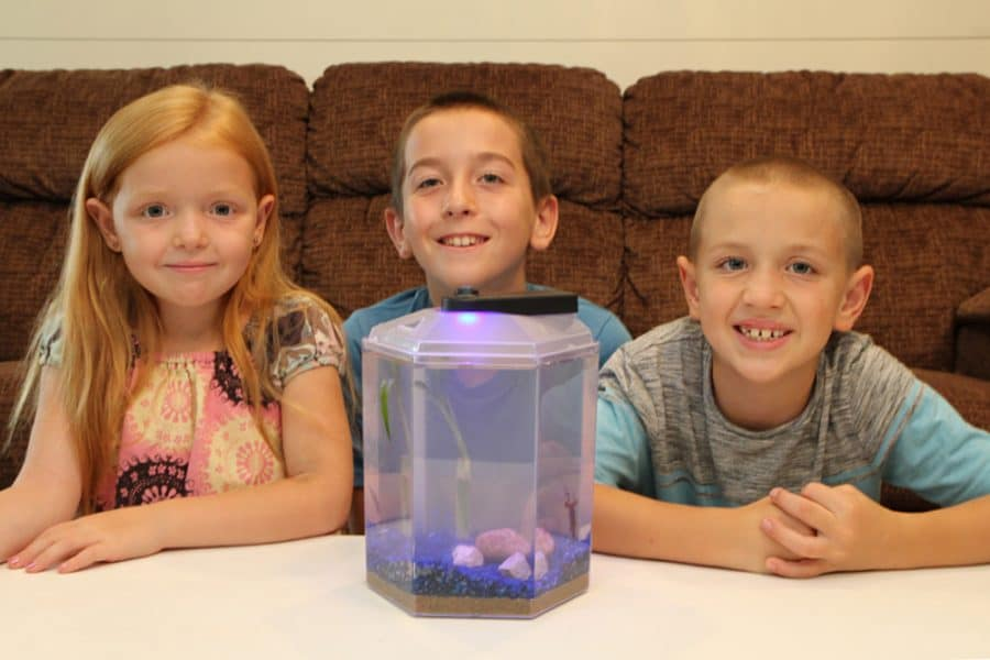 kids with froggy lair - Easiest House Pet Ever! - Froggy's Lair BioSphere
