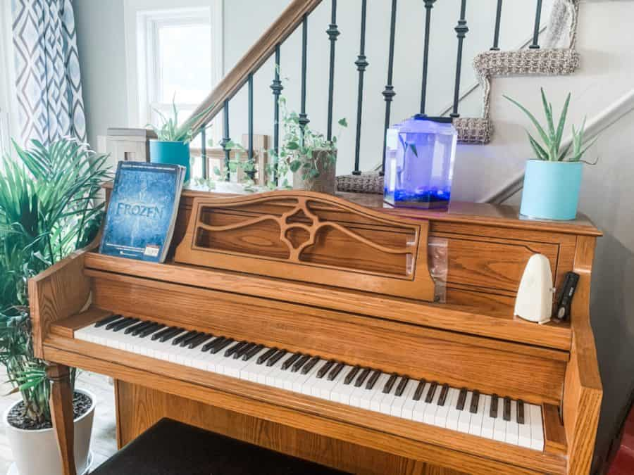 piano with frogs - Easiest House Pet Ever! - Froggy's Lair BioSphere
