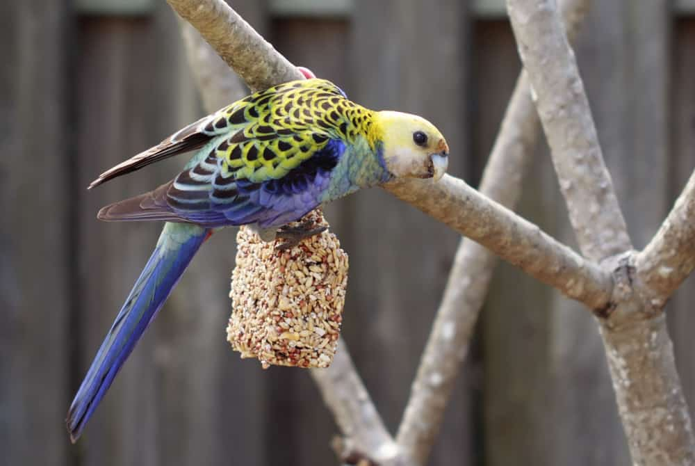 bird - Best Gifts For Your Bird